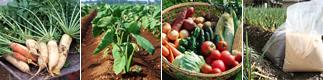 アースター株式会社 有機肥料 野菜作り 家庭菜園